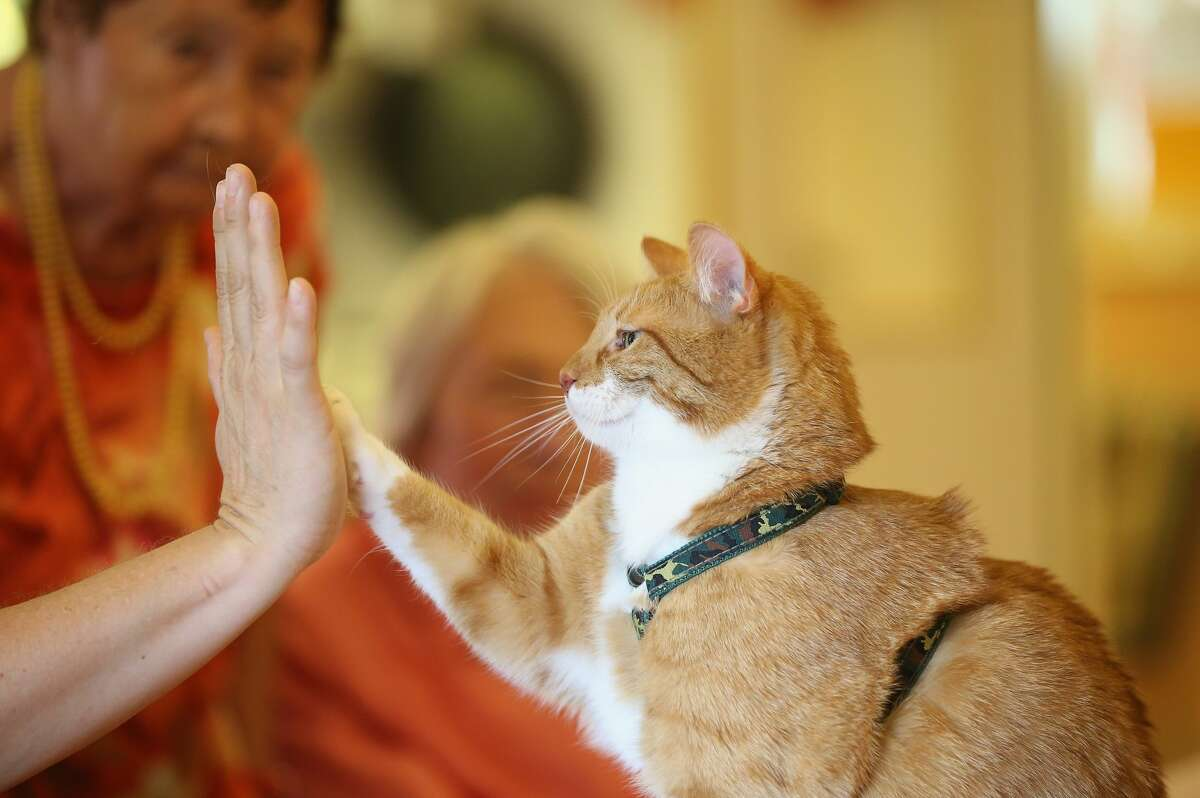 Mogli lifts a paw to touch the palm of his owner Eva Kullmann.