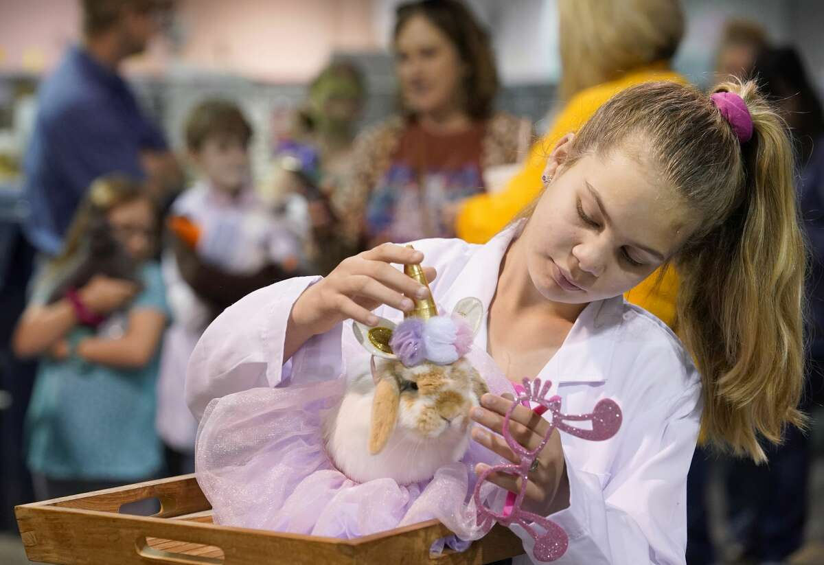 Raegan Neu, 12, of Gainesville waits with her rabbit, Bella, to participate in the Youth Rabbit & Cavy Show Costume Contest in the NRG Arena at the Houston Livestock Show and Rodeo Monday, March 9, 2020, in Houston. Her entry was titled Barbie Showgirl.