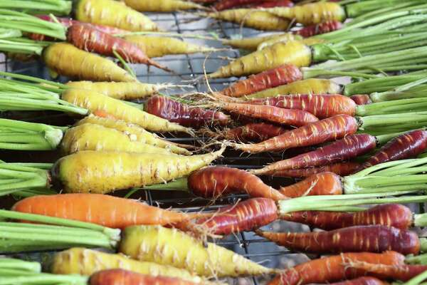 Multi-colored carrots, fresh from the ground