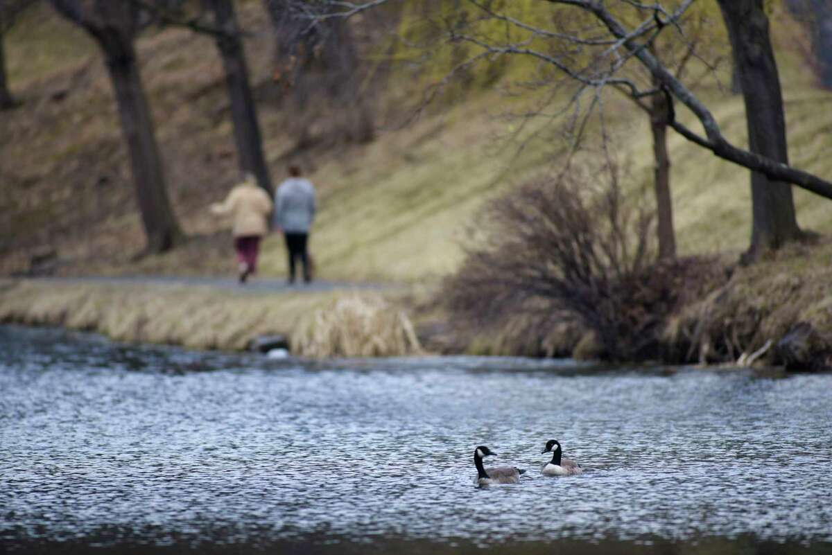 Two geese paddle their way around Washington Park Lake on Tuesday, March 10, 2020, in Albany, N.Y. (Paul Buckowski/Times Union)