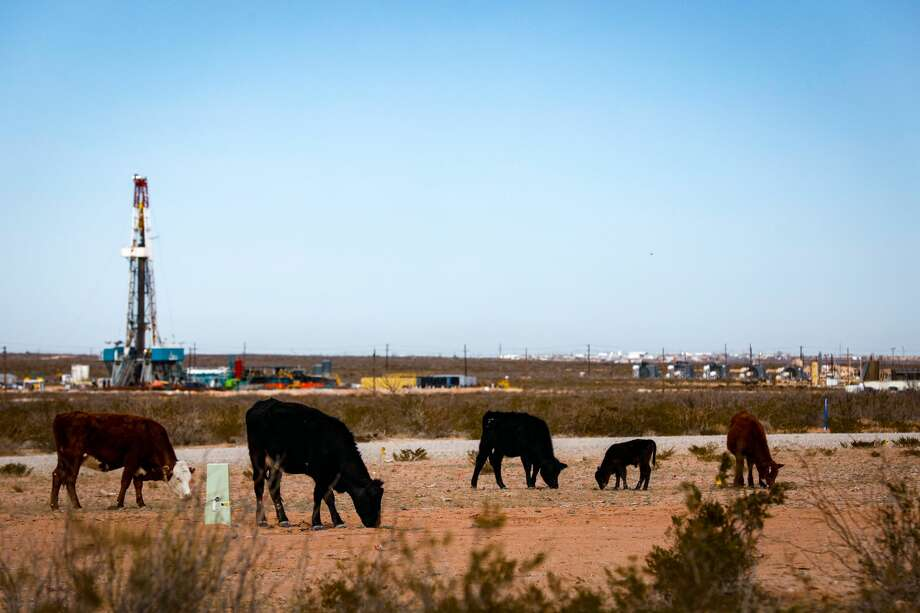Cattle graze near a drilling operation and compressor station, February 17, 2020, near Orla, Texas, in the Permian Basin. MANDATORY CREDIT: The Oilfield Photographer, Inc. Photo: The Oilfield Photographer Inc./The Oilfield Photographer, Inc.