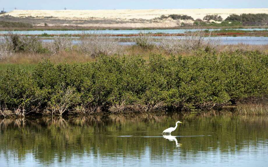 A great egret is reflected in the waters of the Corpus Christi Ship Channel. Photo: Bob Owen / ©2020 San Antonio Express-News