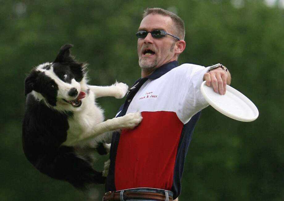 (l-r) Border-Collie Huck jumps off the chest of his owner Tom Sawyer (cq) while chasing after a frisbee Saturday April 28, 2007 during the Space City Disc Dog Championships at Clark Henry Park in Jersey Village, Texas. The Houston Canine Frisbee Disc Club, hosted the event . (BILLY SMITH II/ CHRONICLE) Photo: Billy Smith II, Staff / Houston Chronicle / Houston Chronicle