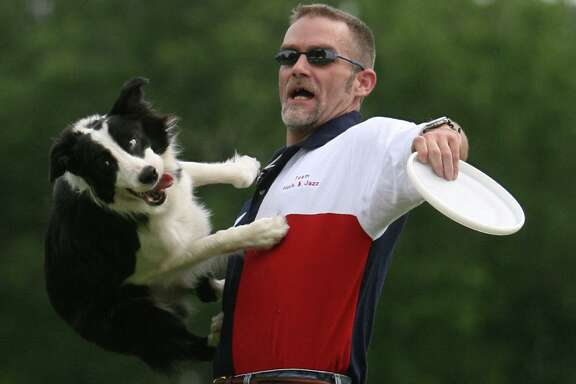 (l-r) Border-Collie Huck jumps off the chest of his owner Tom Sawyer (cq) while chasing after a frisbee Saturday April 28, 2007 during the Space City Disc Dog Championships at Clark Henry Park in Jersey Village, Texas. The Houston Canine Frisbee Disc Club, hosted the event . (BILLY SMITH II/ CHRONICLE)