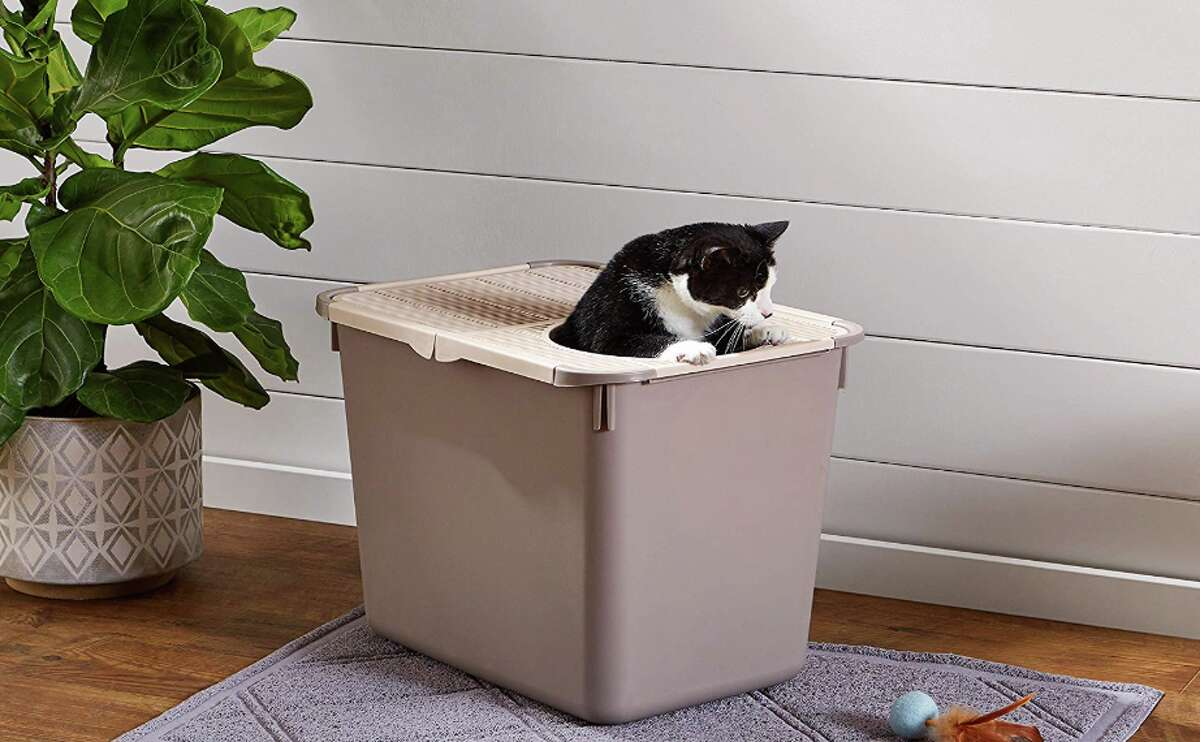 AmazonBasics No-Mess Hooded Cat Litter Box, $20.99