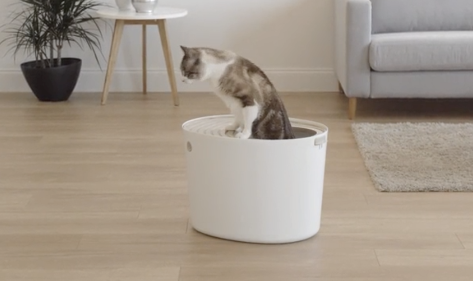 Should I buy a top-entry cat litter box? - SFGate