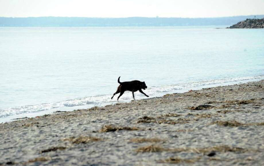 A dog runs along the shoreline at Greenwich Point. Photo: Hearst Connecticut Media / Greenwich Time
