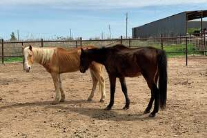 The Ector County Sheriff's Office Animal Control Office received a call on Tuesday in reference to malnourished horses, according to a Facebook post from ESCO.