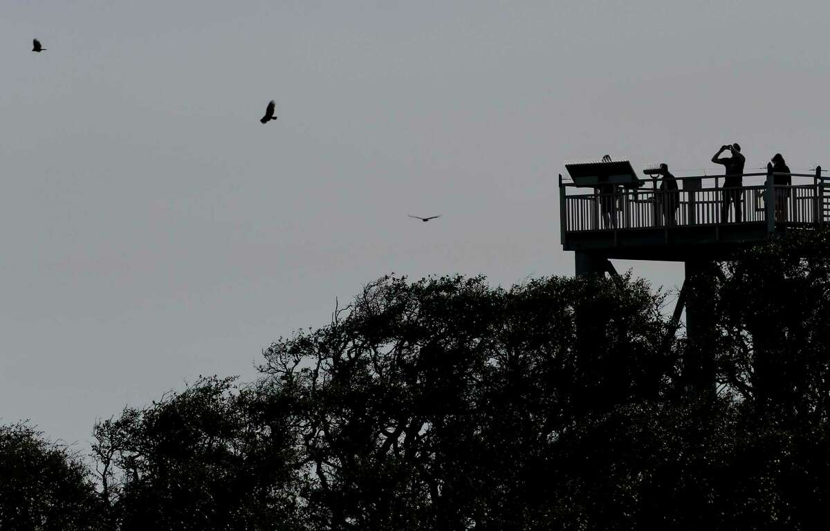 Visitors at the Aransas National Wildlife Refuge look for birds from the wildlife tower in Rockport, Texas. The whooping crane populations was decimated in the 20th century when it numbered about 15 in the 1940s. Today people travel to Rockport and Port Aransas just to see the whooping cranes, which now number more than 500.