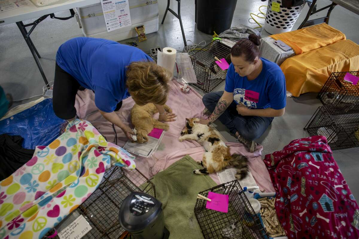 Mary Helen Livingston, left, and Danielle Piatt wait for cats to wake up from anesthesia during the Fix West Texas clinic in this file photo at the Odessa Police Department. Piatt volunteers with the Permian Basin Animal Advocates and live trapped 16 feral cats to be fixed.