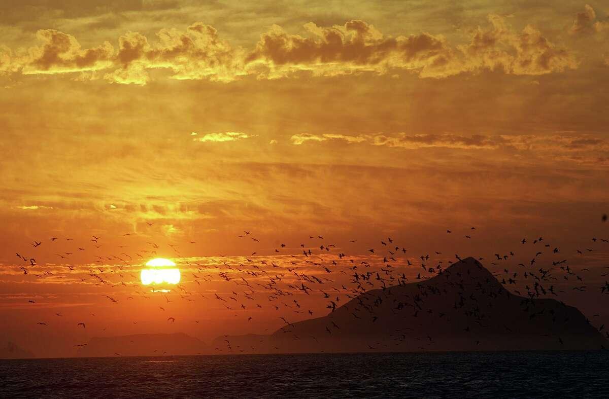 Birds take flight into the sunrise over Anacapa island, as seen from East Santa Cruz Island Scorpion Anchorage.