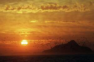 Birds take flight into the sunrise over Anacapa island, as seen from East Santa Cruz Island Scorpion Anchorage.