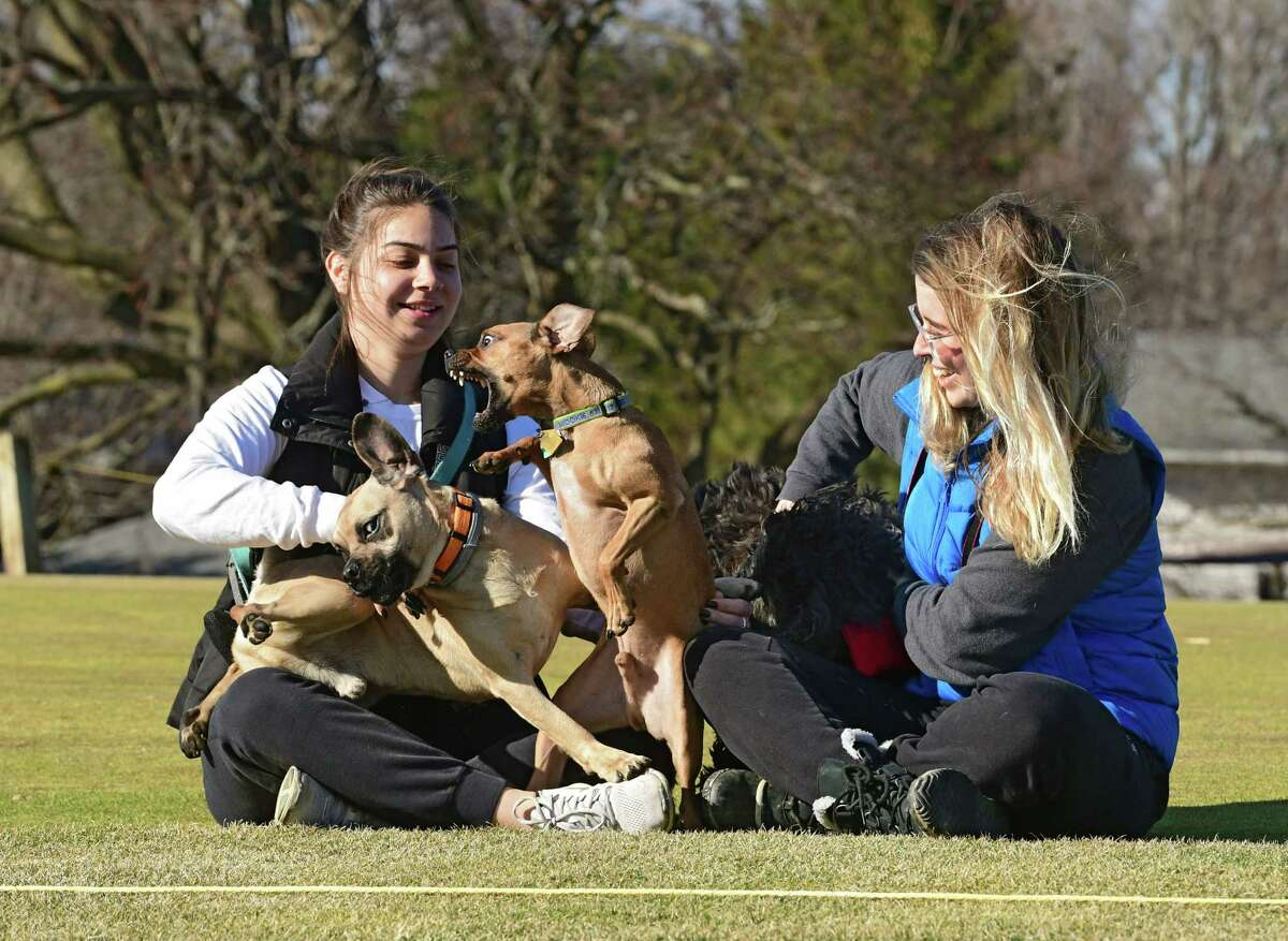 Capital Hills has been a popular destination for dogs, especially with the golf course close. Area golfers are trying to get the city to open the course. (Lori Van Buren/Times Union)