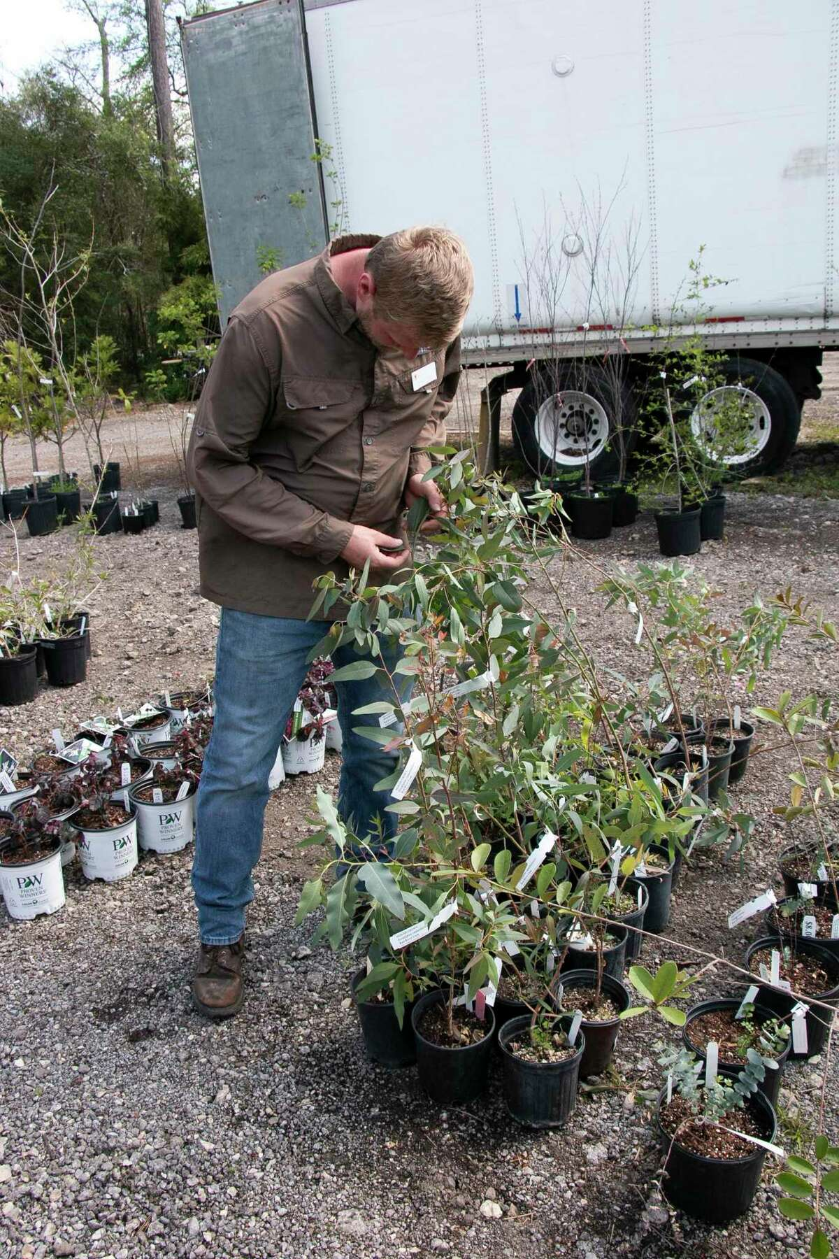 Brandon Hubbard, horticultural manager for The Mercer Society, examines a plant for sale.
