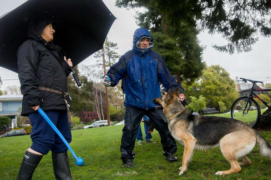 Julie Guthman (left) of Berkeley and Soane Vea of Oakland play with German shepherd Penny while at Willard Park in Berkeley in the rain. The group of dog owners meets daily to exercise and socialize their pets and chat while keeping their distance amid the coronavirus outbreak. Photo: Jessica Christian / The Chronicle