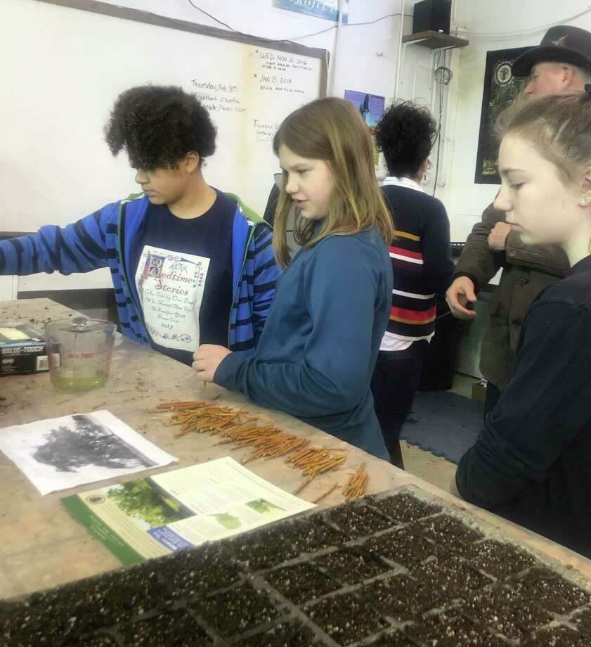 Frankfort Elementary sixth graders visit theArchangel Ancient Tree Archive in Copemish. (Submitted photo)
