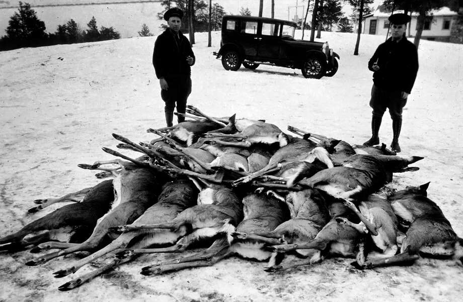 Winter-killed deer are piled up before two Michigan conservation officers in this photo from the 1930s.(Courtesy Photo)