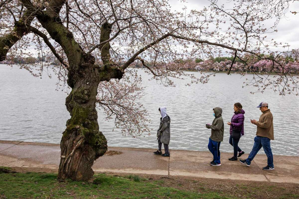 A family from Springfield, Va., who asked not to be named, walk through cherry blossom trees that are beginning to bloom, Sunday, March 15, 2020, along the Tidal Basin in Washington. The eldest son, second from left, decided to wear a mask as it made him feel better about the risk of catching the coronavirus. (AP Photo/Jacquelyn Martin)