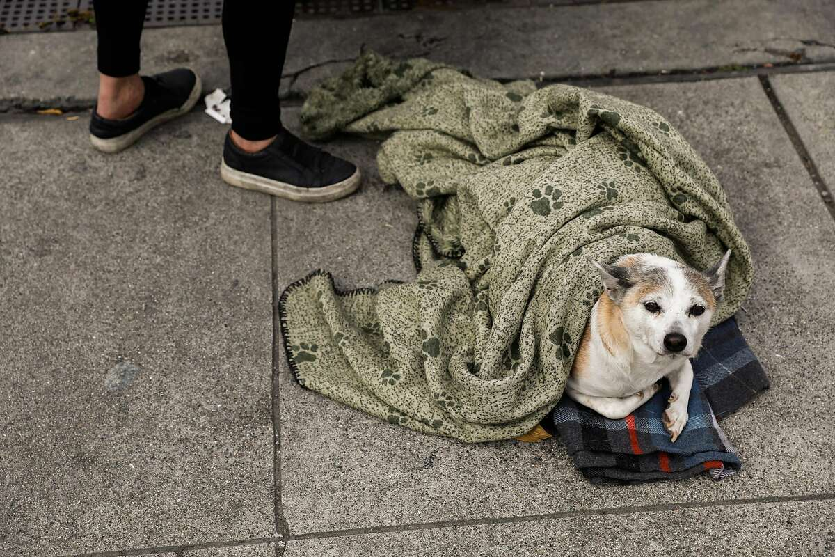 Homeless woman Maria Hernandez and her dog Cooney panhandle on 16th Street on Sunday, March 15, 2020 in San Francisco, California.
