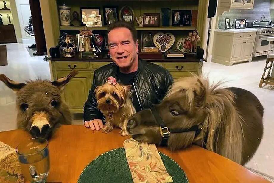 Arnold Schwarzenegger promotes social distancing during the coronavirus outbreak alongside his miniature horse, Whiskey, and donkey, Lulu. Photo: Arnold Schwarzenegger Twitter: @Schwarzenegger, Screenshot