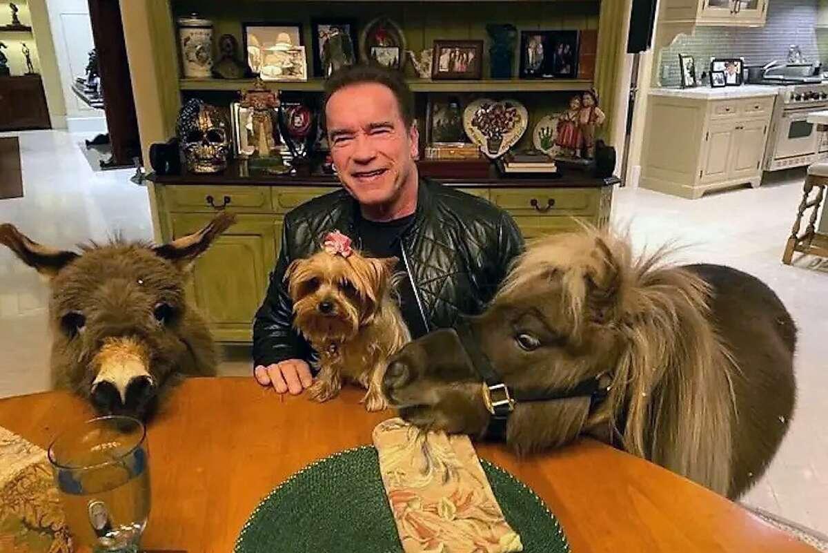 Arnold Schwarzenegger promotes social distancing during the coronavirus outbreak alongside his miniature horse, Whiskey, and donkey, Lulu.