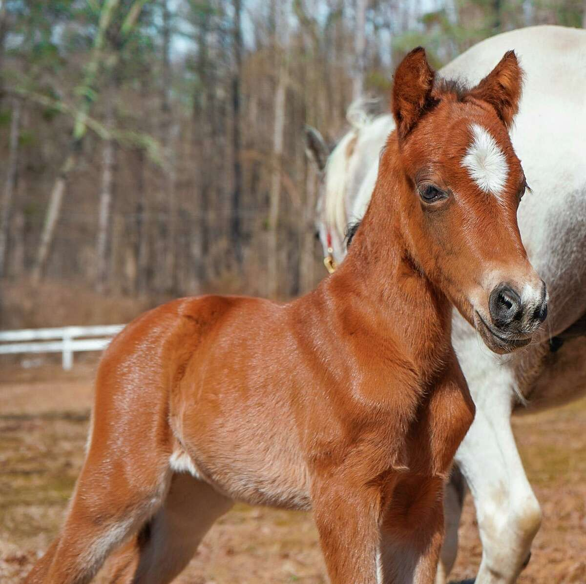 The Rising Starr horse rescue in Wilton, CT, welcomed Rumi into their fold when she was born on March 7, 2020.