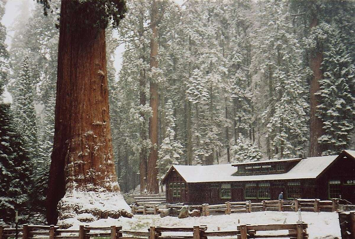 """A giant sequoia, 28 feet in diameter, next to the Giant Forest Museum. John Muir called it """"the greatest of living things."""""""
