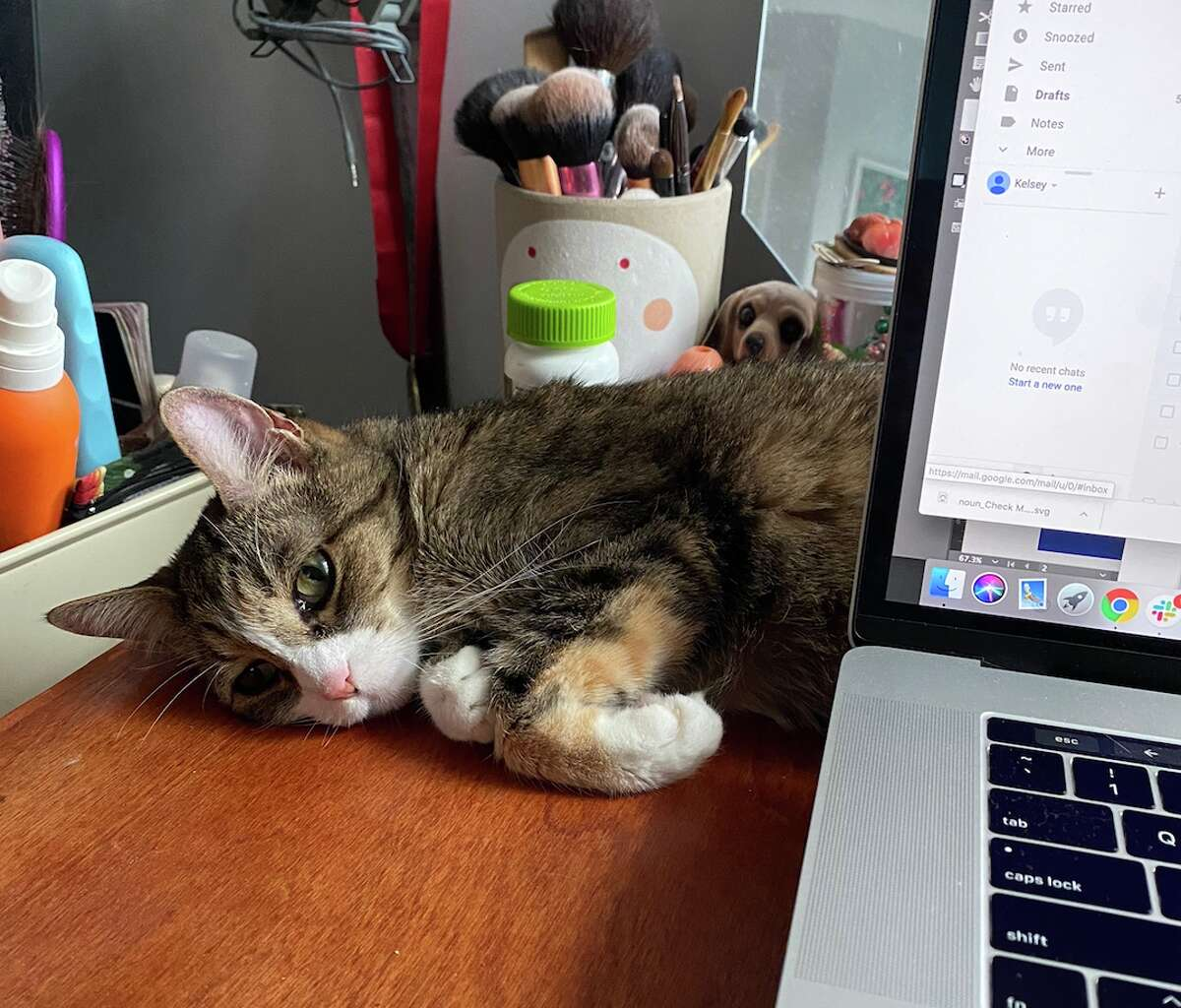 Kelsey, a graphic designer, works from home while her cat Suki lounges on her desk.