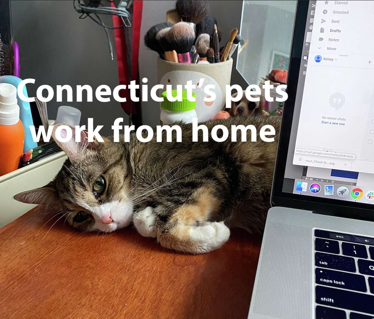 Connecticut's pets work from home