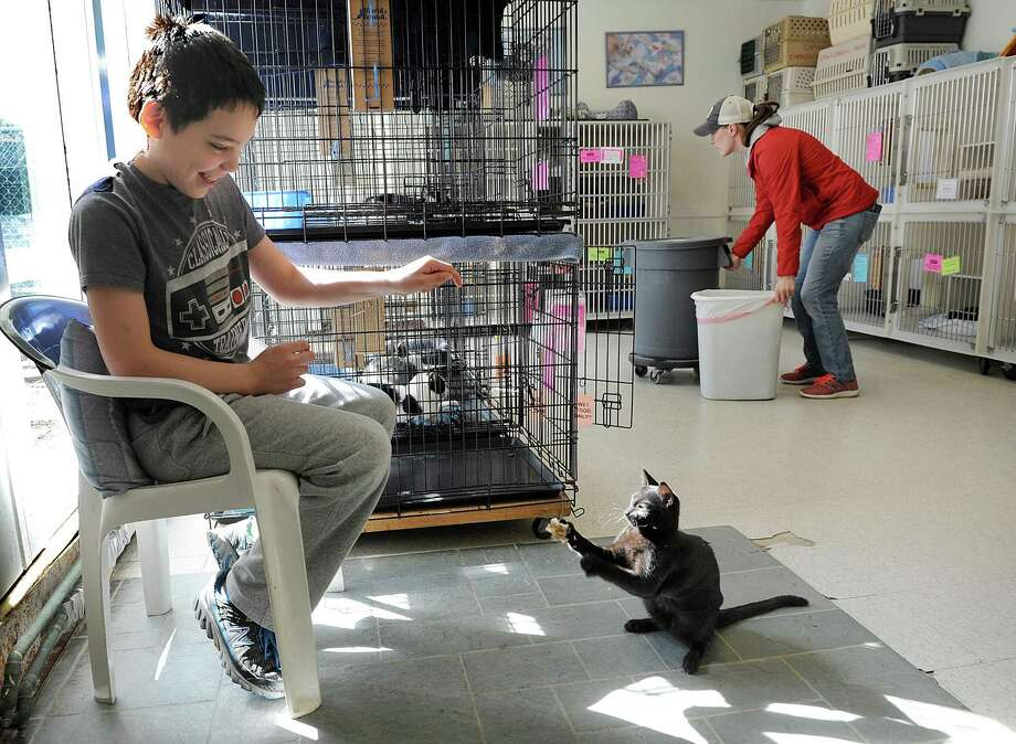 Tyler Grace, 11, plays with a kitten at Danbury Animal Welfare, Monday, March 6, 2017. His mother, Christina Grace, a receptionist and adoption counselor, is right. Fairfield County Giving Day is Thursday, March 9 and the Danbury Animal Welfare Society is one of the participants. Photo: Carol Kaliff / Hearst Connecticut Media / The News-Times