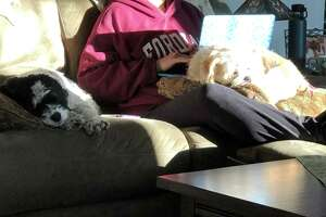 Robert Walsh and his wife, who is also a teacher, have been working from home with their dogs.