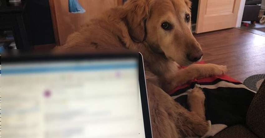When working from home gets lonely or stressful, we have our beloved animal companions to brighten out spirits. Here are some photos submitted by community members.