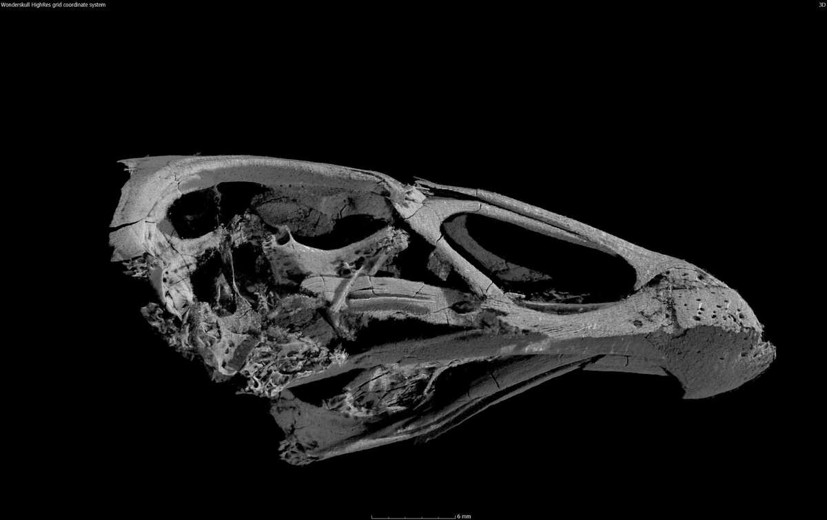 A nearly complete skull, hidden inside a piece of rock, gave clues about an undiscovered ancient bird now named Asteriornis.