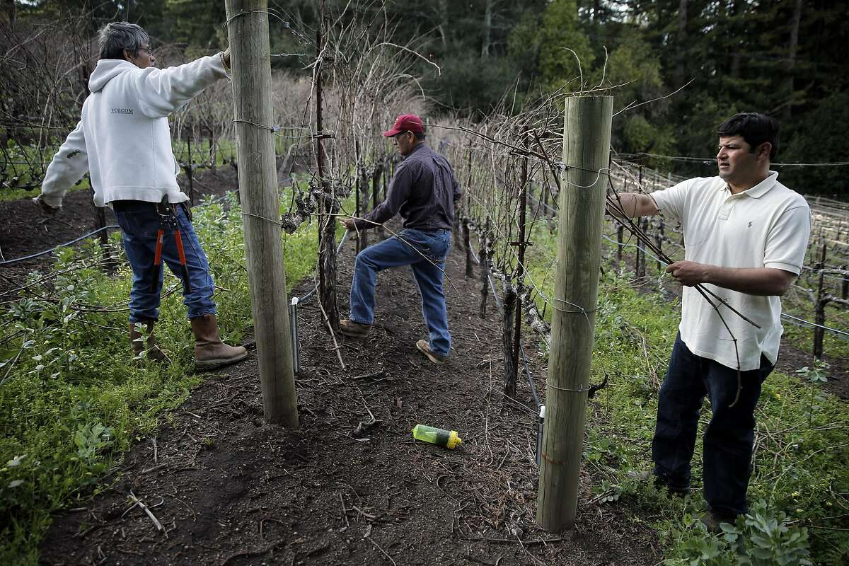 Chuy Ordaz, center, owner of Palo Alto Vineyard Management and his son, Chuy, right, and brother Jose, left, do some pruning on a vineyard he manages in Jack London State Historic Park in Glen Ellen, Calif., on Tuesday, February 23, 2016,