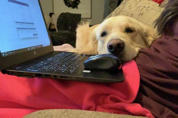 """""""Morty trying to get as much attention as work is getting."""""""