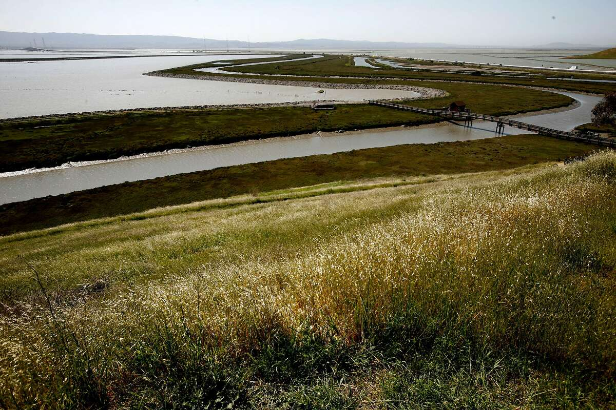The Tidelands Trail, Newark Slough and Salt Pond are seen from the Hilltop Overlook at Don Edwards San Francisco Bay National Wildlife Refuge.