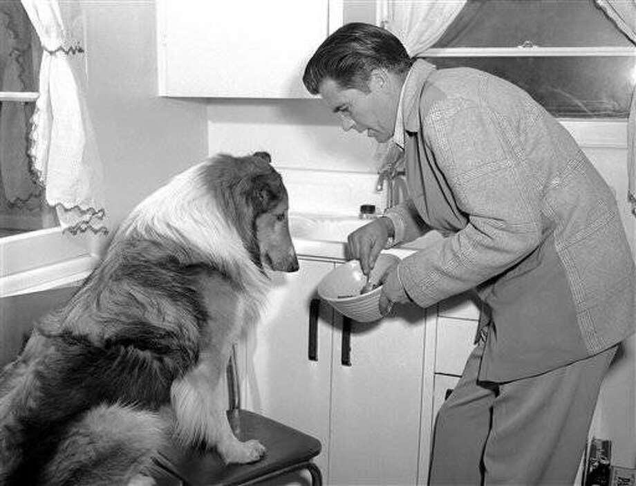 I watch my diet, too so Lassie would say if he could talk, as he eagerly follows his breakfast preparation by Rudd Weatherwax in Hollywood, Calif., on March 20, 1945. (AP Photo)