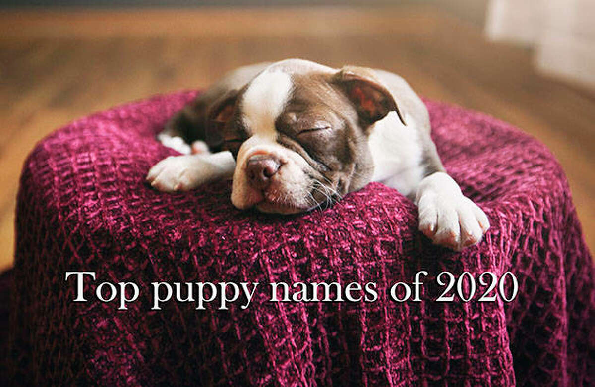 The top puppy names of 2020