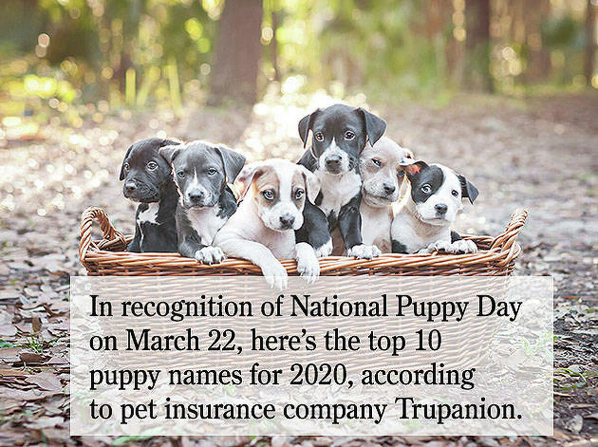 In recognition of National Puppy Day on March 22, here's a look at the top 10 puppy names for 2020, according to pet insurance company Trupanion.