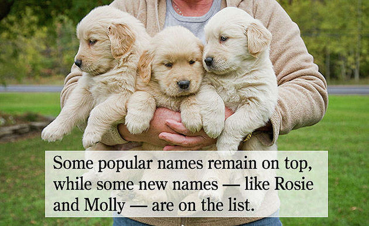 Some popular names remain at the top, while some new names - like Rosie, Teddy and Molly - are on the list.