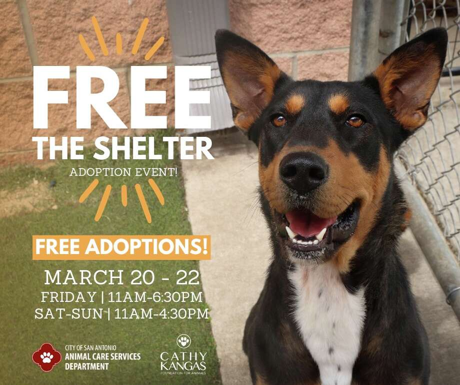 With the hopes of saving every animal in kennels, the San Antonio Animal Care Services is waiving all adoption fees for this weekend. Photo: ACS