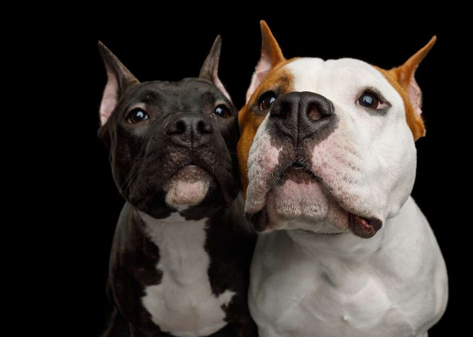 """Stacker counts down the most intelligent pups based on research published byStanley Coren in his 2006 """"The Intelligence of Dogs."""" This slideshow was first published on theStacker.com Photo: Seregraff // Shutterstock"""