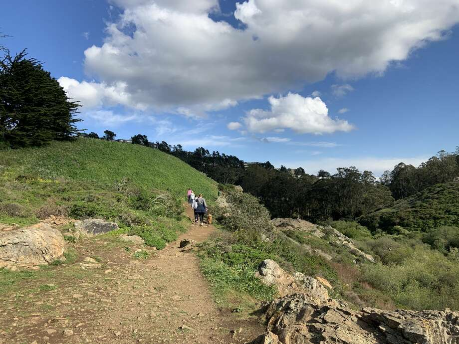 A clear, sunny day in San Francisco's Glen Park Canyon, March 16, 2020 Photo: Amy Graff