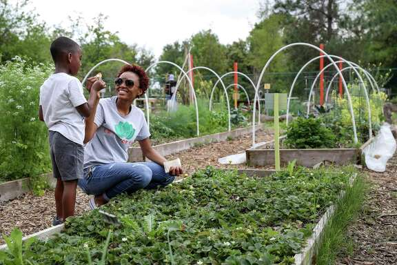"""Karena Poke, founder of Lettuce Live, and Anderson George, a student gardener, make a cheers-motion with freshly-picked strawberries Wednesday, March 18, 2020, at the Lettuce Live urban farm in Missouri City. """"Should wash it off,"""" George said earlier after eating one fresh from the dirt. """"How can we wash it if you ate it all?"""" Poke asked. The farm is located in Buffalo Run Park, and a variety of produce is grown there."""