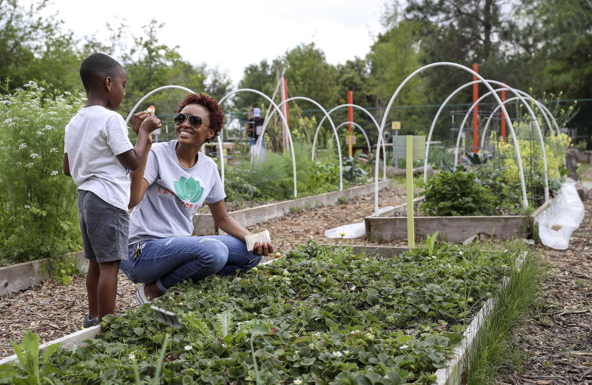 Start Your Own Edible Garden Houstonchronicle Com