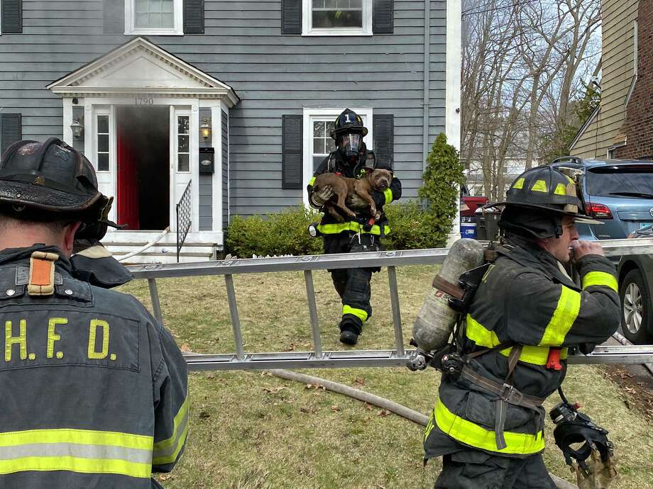 New Haven firefighters rescue a dog from a house fire on Ella T. Grasso Boulevard on March 21, 2020. Photo: Courtesy Of New Haven Fire Department