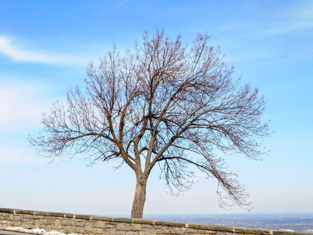 Lorraine Boyd, Delmar, adores this tree in Thacher Park