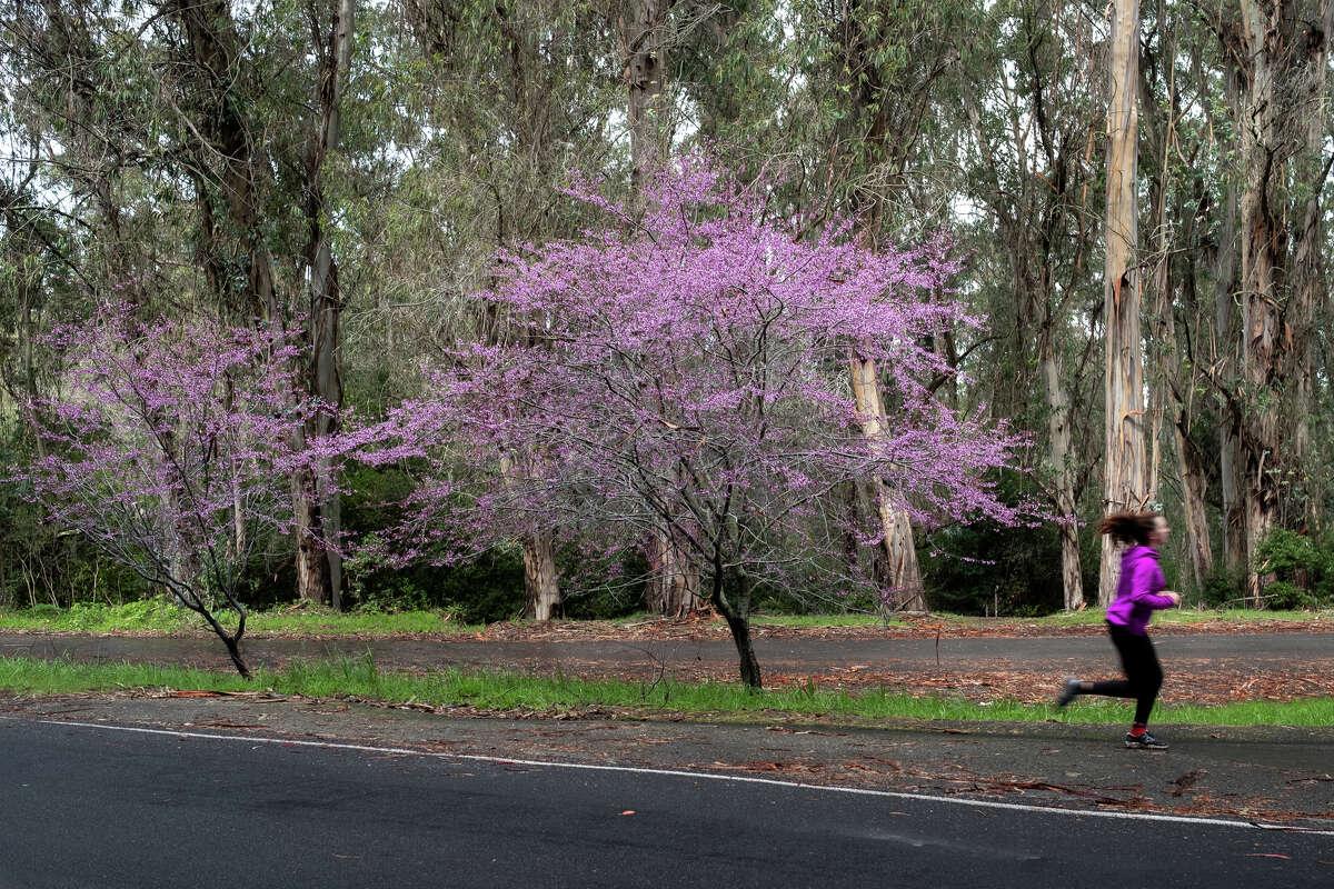 Tilden Regional Park is located between Berkeley Hills and the San Pablo Ridge.