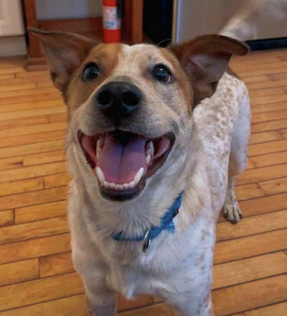Five-year-old Benson was adopted on March 21, 2020 from the Mohawk Hudson Humane Society during the coronavirus pandemic.