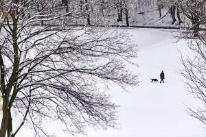 A man walks his dog through Lincoln Park on Tuesday, March 24, 2020, in Albany, N.Y.      (Paul Buckowski/Times Union)